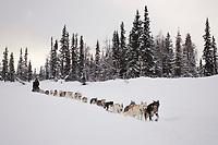 Ed Itens sled dog team on trail near Finger Lake Chkpt 2006 Iditarod Finger Lake Alaska Winter