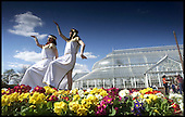 A bit of sun worship, Egyptian style, amid the flowers at the Winter Gardens, Glasgow Green ..... pic by Donald MacLeod 6.05.01