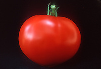 Tomato, red, lucious, fresh, just picked, on plate ready to eat, cutout, cut out, on black background, freshness