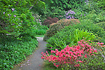 Seattle, WA<br /> Kubota Garden city park, layers of flowering shrubs, ferns and trees along a pathway in the Japanese Garden