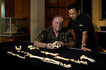 "Dr. William Jungers and Thomas Sutikna admire ""LB1"", the type specimen skeleton of Homo floresiensis, a.k.a., the Flores hobbit."