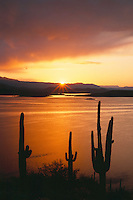 Saguaros at sunrise<br />