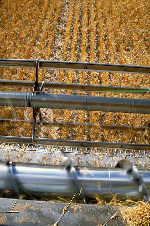 above angle view of wheat harvesting blade cutting wheat shafts. California.