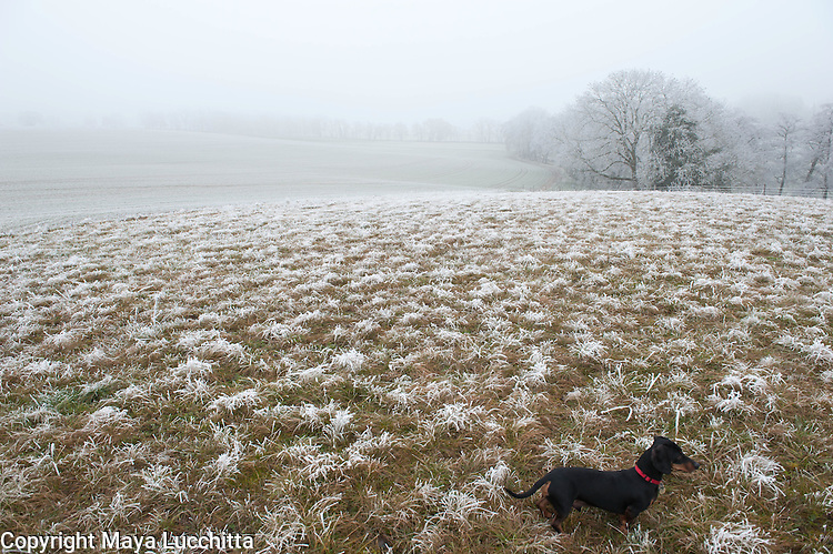 Charlie in the frost.