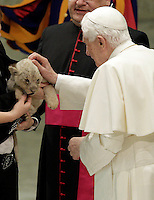 Papa Benedetto XVI accarezza un cucciolo di leone durante la sua udienza agli artisti dello spettacolo viaggiante nell'aula Paolo VI, Citta' del Vaticano, 1 dicembre 2012..Pope Benedict XVI pets a lion cub during his audience to circus artists and workers at the Paul VI hall, Vatican, 1 December 2012..UPDATE IMAGES PRESS/Riccardo De Luca