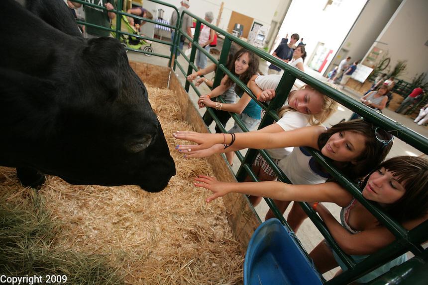left to right- Julia Bosscher, 15, Amberly Fluit, 15, Lynden, and Sara Bosscher, 14, of Everson, bet Ben at the NW Washington Fair. August 19, 2009 PHOTOS BY MERYL SCHENKER ..