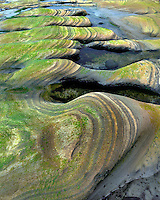 Sandstone formations at Seal Rock Beach Wayside on Oregon coast