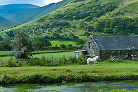 Welsh pony in typical Welsh mountain landscape at Abergynolwyn in Snowdonia, Gwynedd, Wales