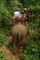 Tourists enjoying an Asian Elephant trek through the jungle.