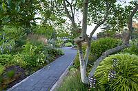 Stone paver path entering Soest Herbaceous Display Garden, University of Washington Botanic Garden, Center for Urban Horticulture, Seattle