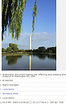 Washington Monument looking over reflecting pool, weeping willow tree in foreground, Washington DC, USA.