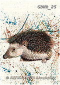 Simon, REALISTIC ANIMALS, REALISTISCHE TIERE, ANIMALES REALISTICOS, paintings+++++KatherineW_SplatterHedgehog,GBWR25,#a#, EVERYDAY