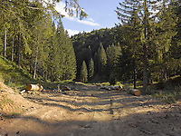 FOREST_LOCATION_90005