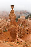 Bryce Canyon National Park, UT: Fog blankets the hoodoos and rock form Thor's Hammer, Bryce Ampitheater