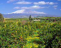 Italy, Sicily, orange trees and snow covered volcano Etna
