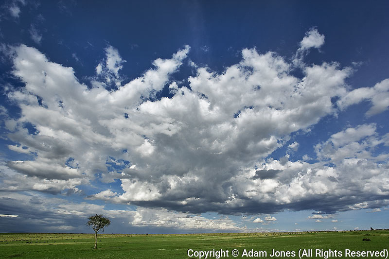 Dramatic sky above green grass, Masai Mara, Kenya, Africa