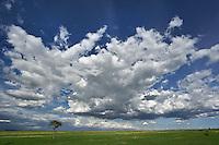 Dramatic sky above green grass, Masai Mara, Kenya, Africa