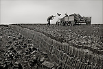 Laphroiag Peat Moss, Islay.  Peat cut for use by Laphroiag Distillery