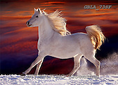 Animals - horses collage  photos