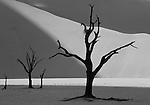 Trees in Namib desert of Namibia