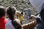 Foto: VidiPhoto<br /> <br /> APELDOORN &ndash; Vroeger dan ooit en met meer jonge dieren dan ooit, is vrijdag de Apenheul in Apeldoorn het nieuwe seizoen gestart. Doordat de seizoensopening plaatsvond op Goede Vrijdag -voor velen een al dan niet geplande vrije dag- was het de drukste start in jaren. De Apenheul is uniek vanwege de vele loslopende aapjes, waardoor een interactie tussen mens en dier mogelijk is. De Apenheul trekt jaarlijks een half miljoen bezoekers en werd in 2016 verkozen tot het leukste uitje van Nederland. Grootste publiekstrekkers van het park zijn de nieuwsgierige doodshoofdaapjes, die zich tussen het publiek bewegen.