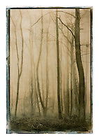 """Size 22"""" x 35""""<br /> <br /> This is a 'one off' print using sensitized gum arabic and watercolor, a 19th. century photographic process. The print is on watercolor paper and is completely archival<br /> Each print can take up to four days to produce.<br /> This print is unique due to the process involved. I may however, produce the same basic image but with a different set of colors, though no more than ten examples.<br /> <br /> Prices on request"""