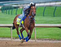 Vyjack, trained by Rudy Rodriguez, works out in preparation for the Kentucky Derby at Churchill Downs on April 29, 2013.