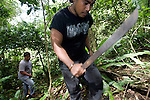 Thom Chipwelong and Graciano Lisua use machetes to carve a way through the jungle that Sakae Oba and his men occupied for 16 months after Saipan was taken over by US forces in Saipan on 22 February 2011. .Photographer: Robert Gilhooly