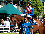 June 18, 2011.American Story ridden by Martin Garcia in the Paddock before the Vanity Handicap as Hollywood Park, Inglewood, CA.