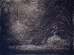 cyanotype image with trees in woodland with noise and grain
