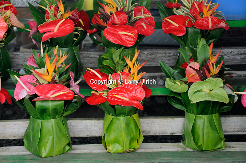 Anthurium baskets<br />