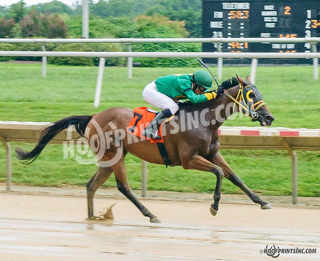 Mizz Martha winning at Delaware Park on 8/11/15