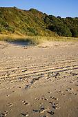 4 wheeler tracks on the sand at Henderson Bay, Far North. Northland, New Zealand.
