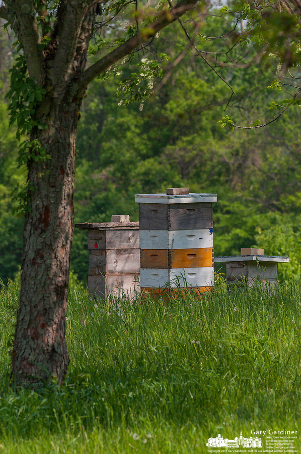 Bee hives on old farm land.