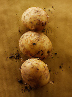 Fresh organic Jersey new Potatoes