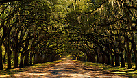 Oak alley at Wormsloe Plantation in Savannah, Georgia