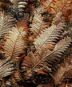 Basket Ferns<br />