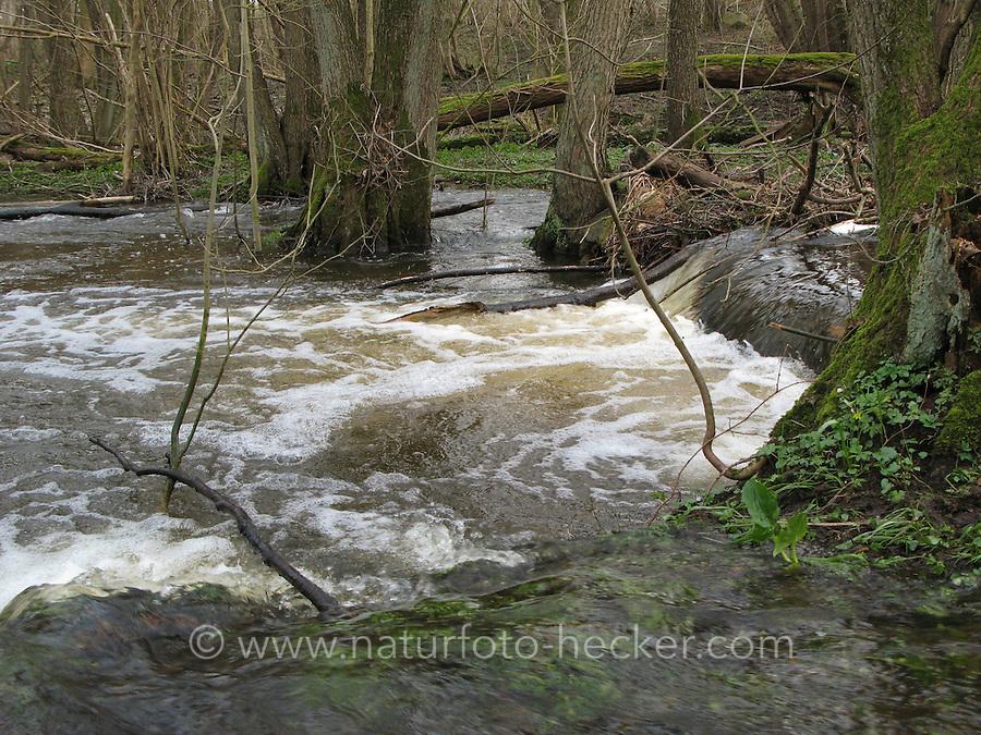 Naturnaher Bach in einem Erlen-Bruchwald mit unterschiedlichen Strömungsbereichen