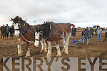 Area view of the Abbeydorney Ploughing competion in Abbeydorney on Sunday............. ....
