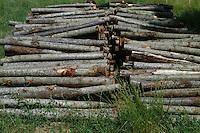 Legname.Timber...