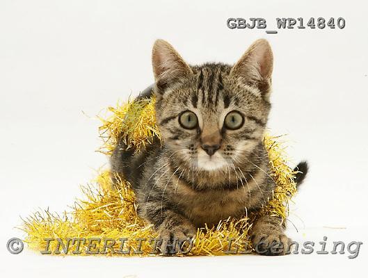Kim, CHRISTMAS ANIMALS, photos, GBJBWP14840,#XA# stickers