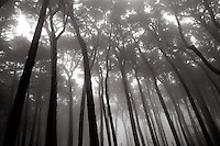 North America, United States of America, California, San Francisco, Kobbe Key Forest in Park Presidio, ©Stephen Blake Farrington<br />