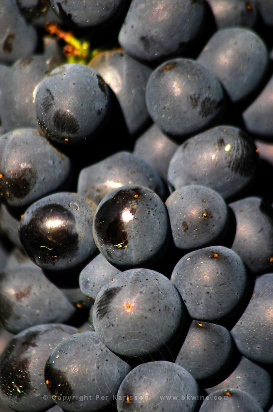 pinot noir domaine michel juillot mercurey burgundy france