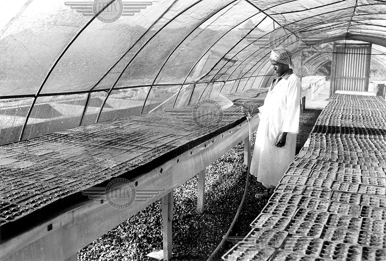 © Heldur Netocny / Panos Pictures..Keren region, ERITREA..Watering seeds in a greenhouse on the Elabered Estate, the country's largest horticultural farm and the biggest employer in the region with 600 workers. Recently privatised and recovering from 30 years of neglect, Elabered produces citrus fruits, vegetables, pork and dairy products.