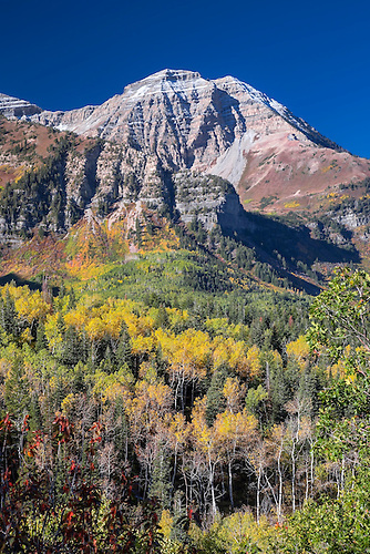 Fall foilage has arrived in the Uinta National Forest near Provo, Utah