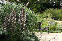 A large clump of acanthus and tall grass gives a feeling of privacy to the seating area