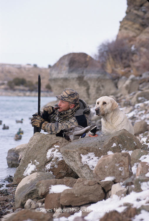 34-498. A duck hunter with a yellow Labrador retriever calls ducks along the Snake River, Idaho.