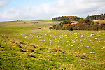 Fyfield Down national nature reserve, Marlborough Downs, Wiltshire, England, UK unimproved chalk grassland with sarsen stones in dry valleys