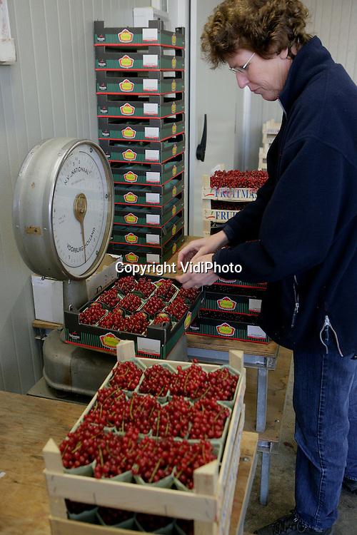 Foto: VidiPhoto..ANDELST- Personeel van bessenteler Chris Tijssen in het Betuwse Andelst sorteert de oogst van augustus die uit de koelcel komt. Zo vlak voor Pasen is er veel vraag naar rode bessen. Vrijwel de gehele productie gaat via veiling Fruitmasters naar de horeca. Voor consumenten zijn bessen op dit moment nauwelijks te betalen. Een kilo kost al snel 20 euro. De vraag naar zacht fruit neemt ieder jaar met zo'n 20 procent toe, vooral door de gezondheidshype die op dit moment gaande is, vertelt Tijssen