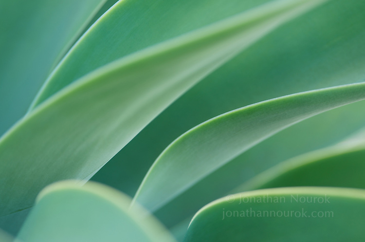 Close-up of a blue/green agave plant.